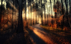 Picture forest, treatment, Sunset, the sun's rays