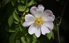 Picture Macro, Macro, White flower, White flower