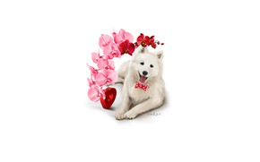 Picture flower, dog, white, heart, Orchid