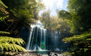 Wallpaper forest, nature, glare, waterfall, jungle, Tasmania