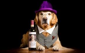Picture bottle, dog, hat