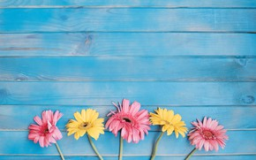 Picture flowers, background, yellow, colorful, pink, gerbera, yellow, wood, pink, flowers, spring, gerbera