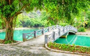 Picture greens, trees, branches, pond, Park, foliage, Vietnam, the bridge, Province, Ninh Binh, Ninh Binh
