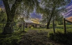 Picture Nature, Bridge, Trees