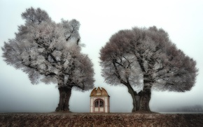 Picture trees, nature, chapel