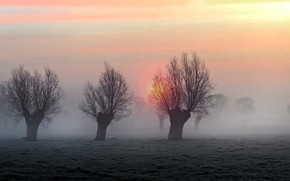 Picture the sun, trees, nature, fog, the evening, morning, haze