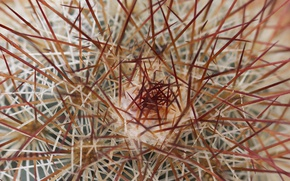 Picture needles, nature, cactus, barb