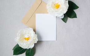 Picture sheet, Flowers, the envelope, Camellia