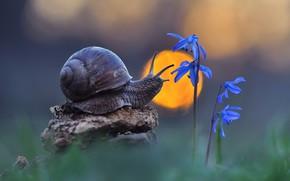 Picture the sun, snail, primrose
