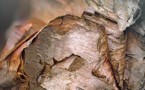 Picture macro, bark, birch