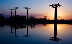 Picture water, trees, reflection, morning, Africa, baobabs