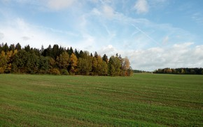 Picture field, the sky, grass, trees