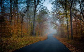 Picture road, autumn, Trees, Forest
