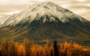 Picture autumn, forest, trees, mountain, Alaska