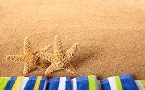 Wallpaper nature, beach, starfish, sea
