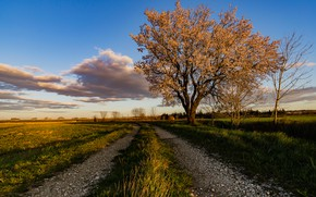 Picture road, the sky, France, the almond tree