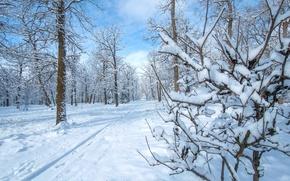 Wallpaper winter, snow, Park, trees