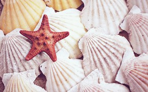 Picture Nature, shell, starfish