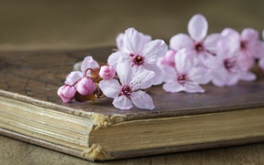Picture cherry, style, book, flowers, branch of cherry