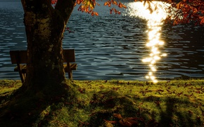 Picture lake, tree, bench