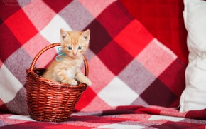 Picture cat, cat, red, kitty, red