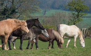 Picture greens, field, grass, trees, nature, Park, mood, horse, glade, horse, horses, spring, horse, pasture, meadow, …