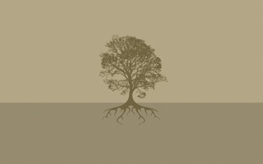 Picture roots, background, tree, earth