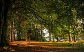 Picture autumn, forest, leaves, the sun, trees, branches, Park, river, foliage, Ireland, benches, Monaghan, Castleblayney