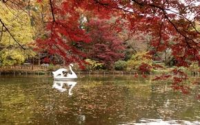 Picture Nature, Autumn, Lake, Japan, Tokyo, Park, Japan, Nature, Fall, Park, Autumn, Tokio, Lake