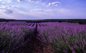 Picture field, the sky, clouds, trees, flowers, Spain, lavender, Malacuera