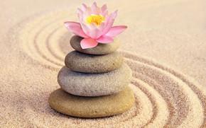 Wallpaper zen, stones, Lotus, flower, flower, sand, pink, sand, stones, Spa, spa