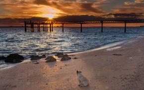 Picture sea, sunset, bridge, shore, dog