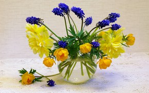 Picture flowers, nature, mood, holiday, beauty, plants, spring, may, still life, blue color, a bunch, daffodils, ...
