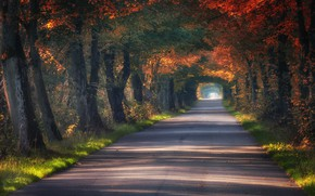 Wallpaper Poland, the tunnel, alley, road, trees, autumn