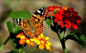 Picture petals, moth, nature, insect, butterfly, flower
