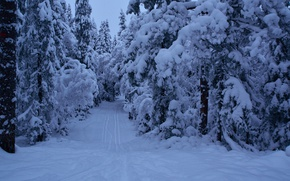 Picture Winter, The evening, Snow, Norway, Frost, Twilight, Track, Snow, Evening, Norway, Forest, Trees, Path, The …