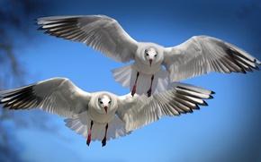 Picture flight, birds, wings