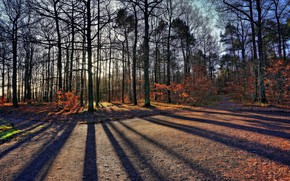 Picture forest, nature, shadow