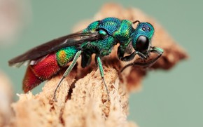 Picture eyes, macro, background, plant, OSA, insect, green, colorful, rainbow, brilliant, bestanca