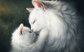 Picture cat, animals, white, kitty, cats, feelings, baby, mom