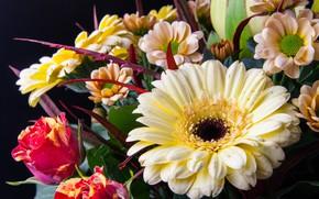 Picture rose, bouquet, chrysanthemum, gerbera