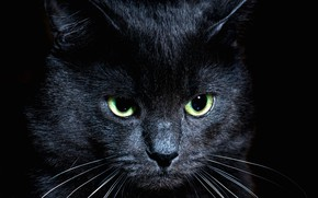 Picture cat, look, black