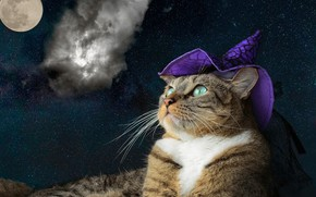 Wallpaper cat, starry sky, the moon, purple, hat, collage, cap, green eyes, fashion, striped, grey, cap, ...