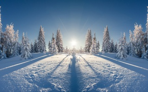 Wallpaper winter, field, forest, the sun, rays, snow, landscape, reflection, beauty, ate, frost, space, the snow, ...