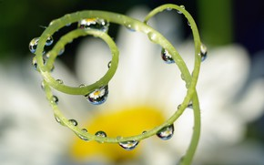 Picture summer, water, drops, macro, flowers, nature, reflection, fantasy, chamomile, beauty, plants, spiral, Association