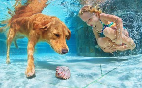 Picture water, child, dog, pool, shell, girl, water, dogs, child, pools