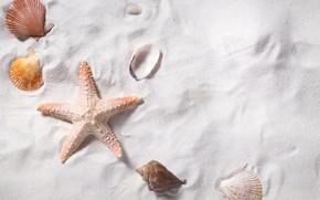 Picture sand, sea, beach, star, shell, summer, beach, sea, sand, starfish, seashells