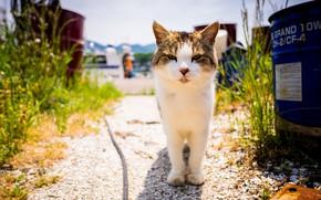 Picture summer, look, cat