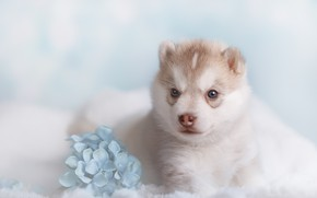 Picture flowers, background, dog, bokeh, photo session