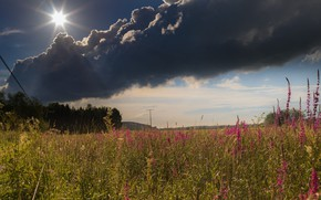 Picture grass, flowers, meadow, Sunny, cloud